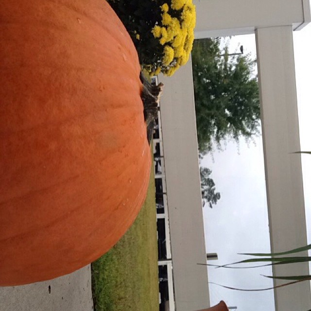This is a pumpkin that is part of the fall decorations outside of the Family Y.